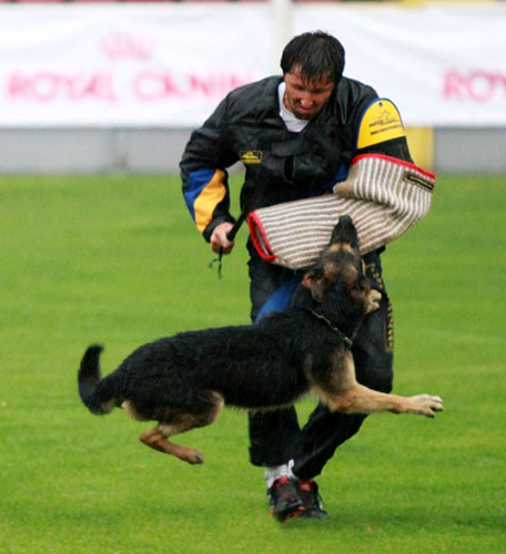 international competitions for dogs fordogtrainers wusv 2011 figurant