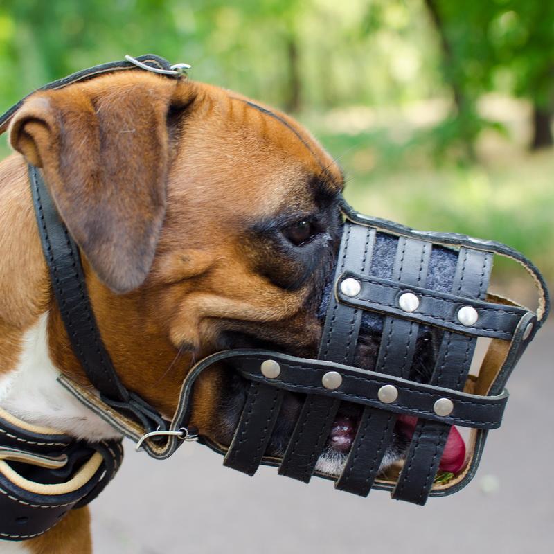 Картинки по Ðапросу кожаный намордник для собак